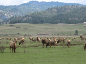 Marvelous ... Outdoor Activities And Abundant Wildlife Are All Found In This Pristine  Area Located Only One Hour From Boise, The Capital Of Idaho. Garden Valley  ...